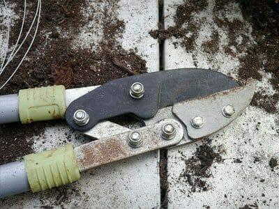 smaruje nożyce ogrodowe